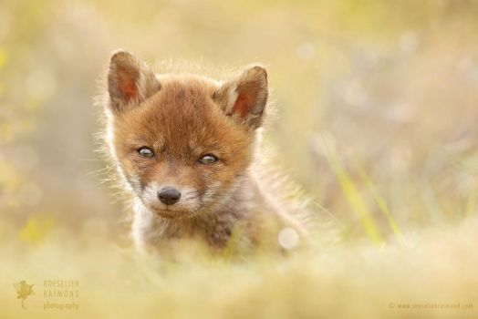 Cute Baby Fox by thrumyeye