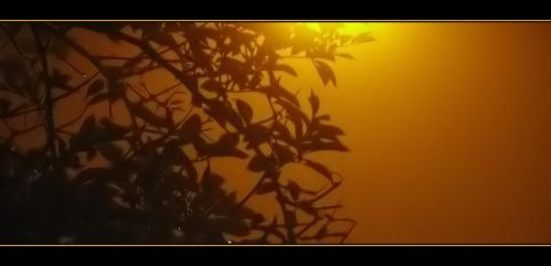 Leaves and Light in the Fog by enervation