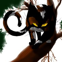 Warrior Cats: Sol by WhiteFlameSoul