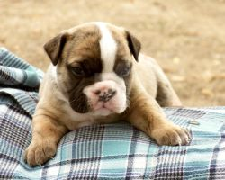 Hastings by NobleBulldogges