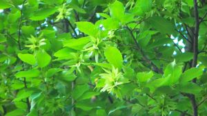 Bright Green Leaves by KirstenStar