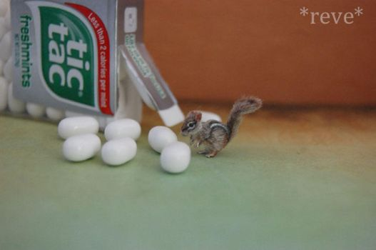 Miniature Chipmunk * Handmade Sculpture * by ReveMiniatures