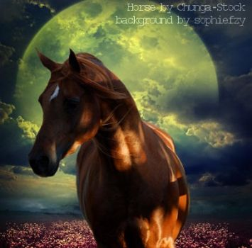 Horse Picture 8 by CocoQueenofCards