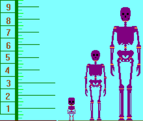 Human Height Range by TommyProductionsInc