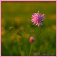 A Touch Of Pink by allym007