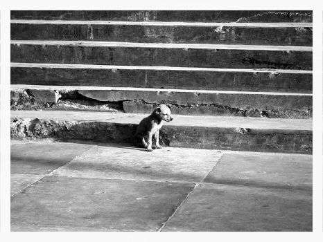Lonely Dog by sid
