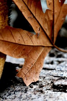 the leaves that were green turn to brown by Echoed-Scribbler
