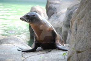 Sea Lion No. 93 by smilks76