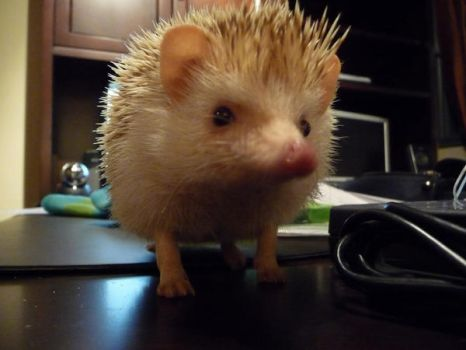 .Hedgie. 1 by AtmosfearK-os
