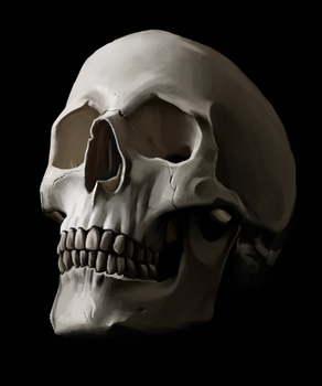 Skull Study by Splodeman