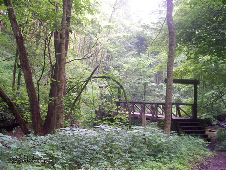 Bridge in the Woods 2 by LightsaberGuy