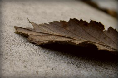 Leaf. by Caven412