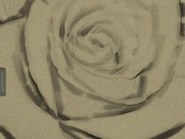 Etched Rose by capturedbykc