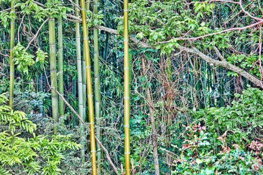 Bamboo by Rebelmoon