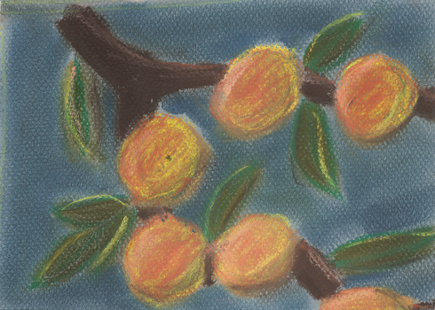 Oranges, Chalk Pastel by shaybee
