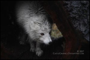 Bedraggled by CastleGraphics