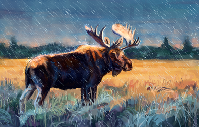 Elk by AlaxendrA