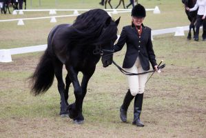 STOCK - Friesian Show 2012-19 by fillyrox
