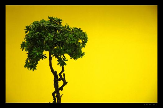 The Tree and the yellow wall by anothervision