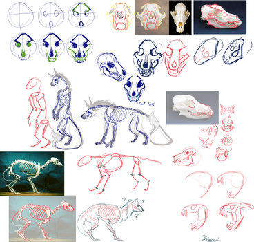 How to sketch canine skulls by Remarin
