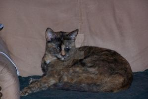 Tortie Two-Seus all grown up. by fanfictionaxis