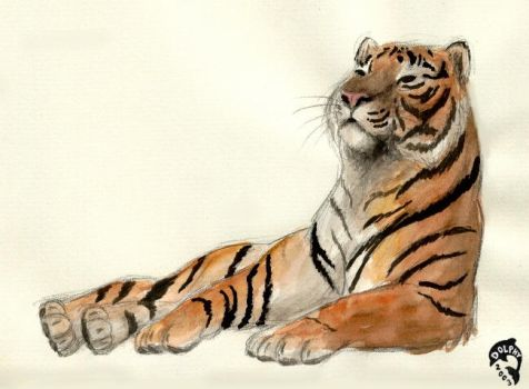 Tiger sketch 1 by DolphyDolphiana