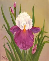 Iris and Buds by W. Redman by wanred