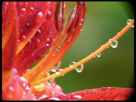 Droplets in the flower by BigBenFR
