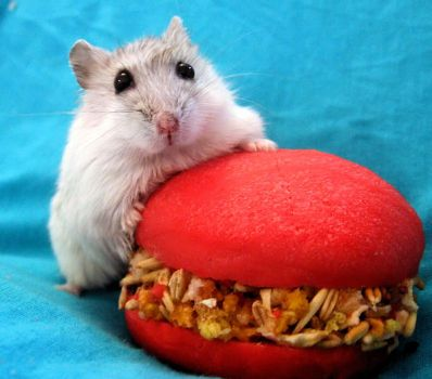 Hamster Pompon and Hamburger by puchikumo
