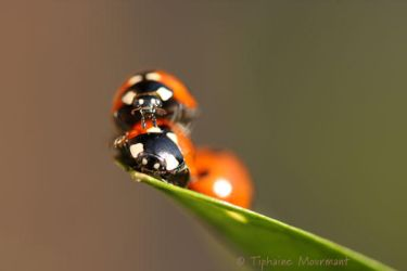 Ladybird's family by TiphyM