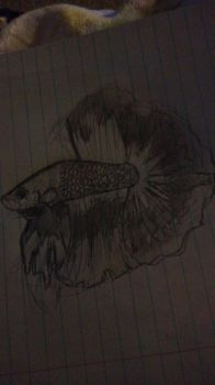 betta drawing by musicisthenewspeech