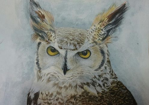 Great Horned Owl by BiLyBao