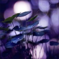 purple moons by prismes