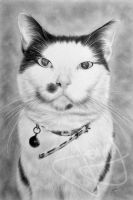 Tom the cat by CubistPanther