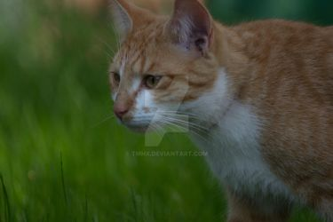 Cat in grass (: by TMHx