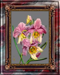 Vintage Orchid Antique Design Onyx Marble by Baptiste-Posters