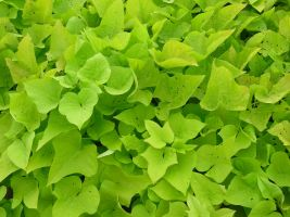 BASIC TERMS, Green Ivy Stuff by mmp-stock