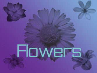 Flowers by AMPenizer