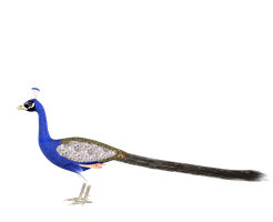 STOCK PNG peacock2 by MaureenOlder