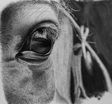 Horse eye sketch by weestby