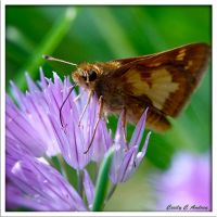 Afternoon Delight With Skipper by CecilyAndreuArtwork
