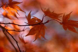 Autumn Color Fest by Andruhastepanov