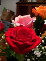 red rose 1 by turtledove-stock