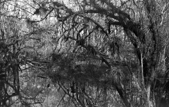 Kirby Storter Park - Big Cypress Swamp by rdungan1918