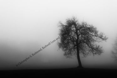 Single Tree Reaching into the Fog by redwolf518