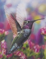 Ruby-throat Hummingbird by Starfire-Productions