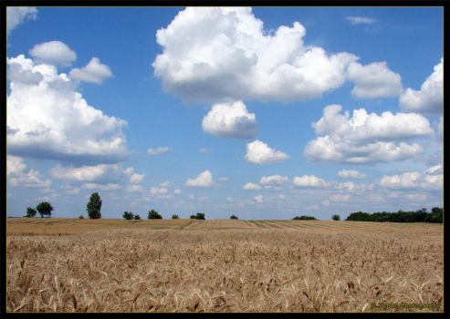 Fields under the sky by tybcorp
