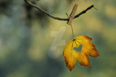 Autumn Dream by Davils-Photography