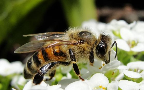 Bee Gone by Victims-of-Knowledge