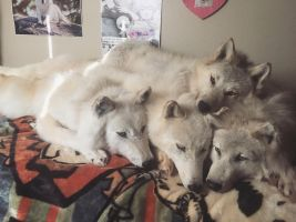 Arctic wolf soft mount pile by ZombiexStrike